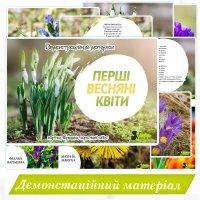 Демонстраційний матеріал «Перші весняні квіти»