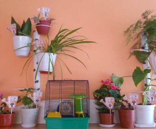 Набір для маркування кімнатних рослин